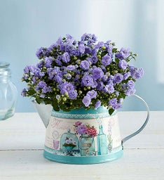 Springs Blooming Watering Can