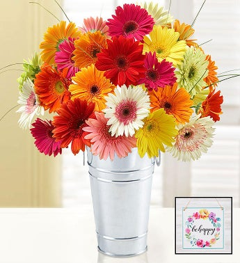 Happy Gerbera Daisies 24 Stems